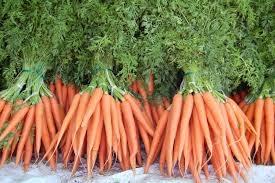 Как вылечить геморрой ботвой моркови