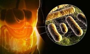 Пребиотики как второй этап лечения дисбактериоза